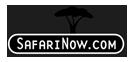 Safari_now
